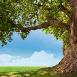 世界マザーサロン「心の木」を育てよう~東洋思想と心の木瞑想~