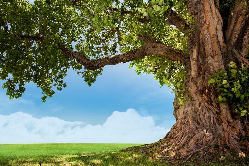 スタサポ30の特徴:オリジナルメソッド<心の木を育てよう>がベースのカリキュラム